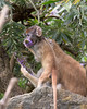 2.  Baby grabs a flower of his own and takes a big bite!  <br /> (Patas Monkeys)