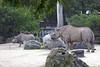 Black Rhinos, Elly & Boone