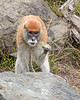 """Want some?""  (Patas Monkey, Emma)"