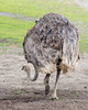The other end of Ms. Ostrich