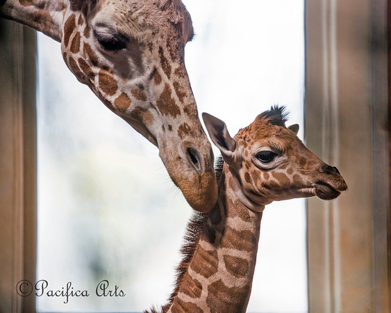 Barbro's checks on her baby daughter, Ingrid