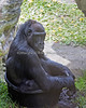 Best seat in the house!<br /> (Western Lowland Gorilla, Nneka)