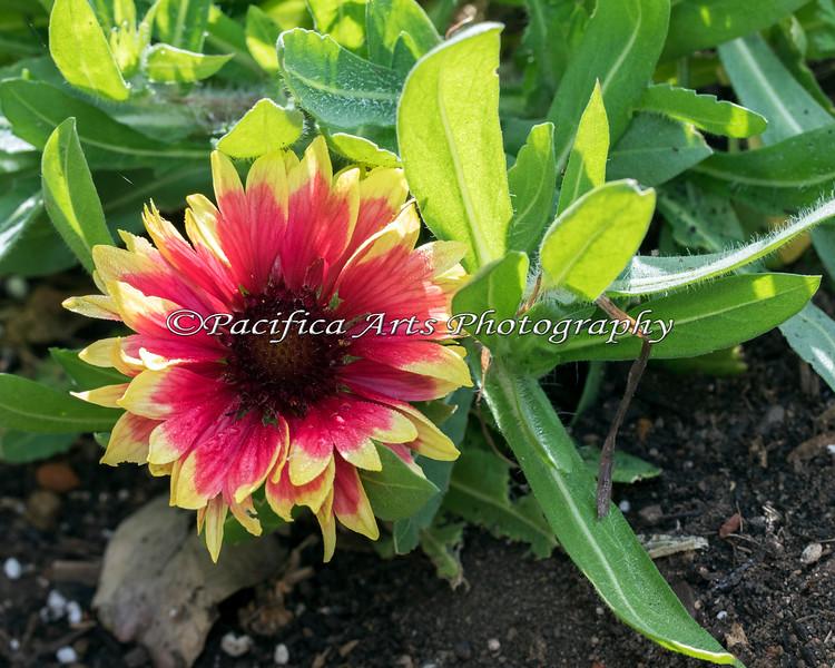 Stunning flower at Conservation Corner