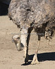 A bird's eye view - way down low!  (Ostrich)