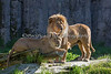 Father and son: Jasiri on the left & Jahari on the right.