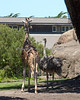 Now that Ingrid is about 7-8 feet tall, Ms. Ostrich is not so scary anymore!
