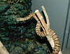 The Mamushi (Gloydius blomhoffi) The only venomous snake on display.  Tisk, Tisk