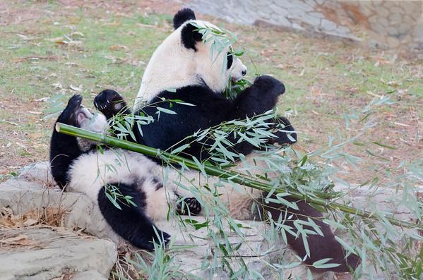 Saturday Zoo, December 27, 2014
