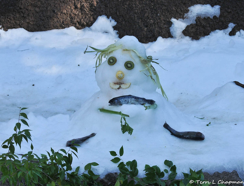 An edible Snowman created for the American Black Bear