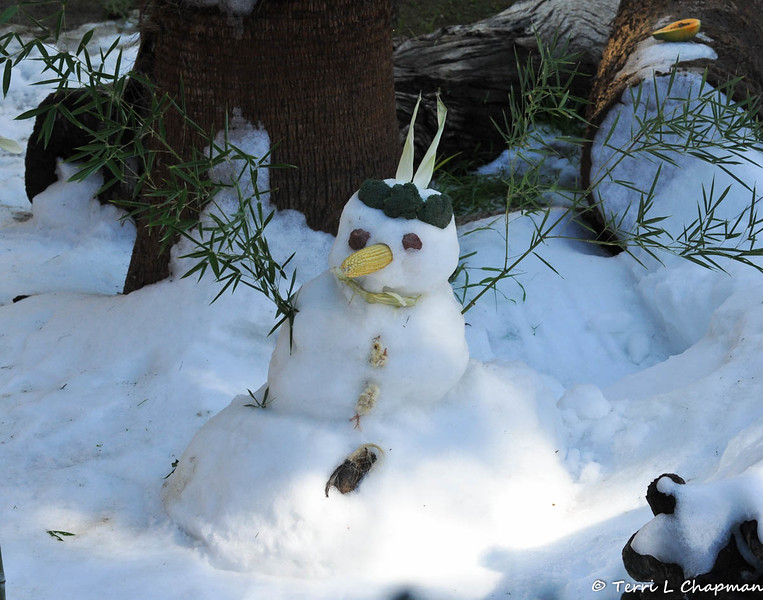 An edible Snowman created for the Sumatran Tiger