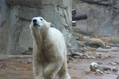 Polar Bears were happy!