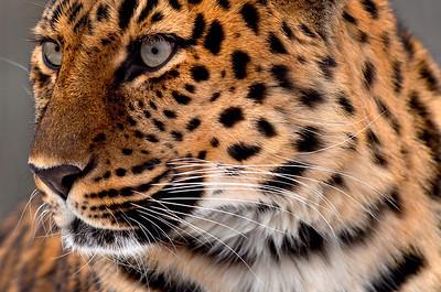St Louis Zoo 20140108
