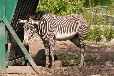 Valley Zoo, Edmonton, Alberta