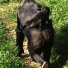 Mother Mandara and baby Kibibi
