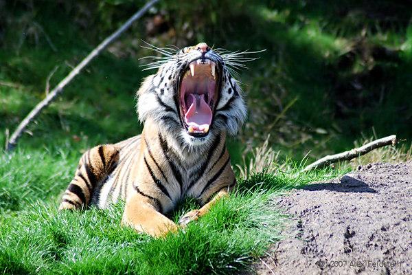 A good yawn