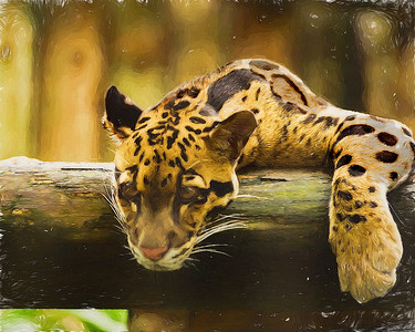 Leopard  2018
