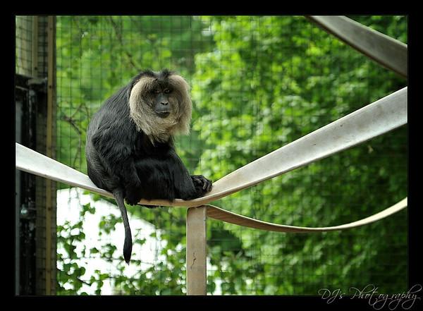 Toronto Zoo May 27 2012