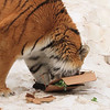 tiger enrichment