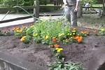 gardenshots