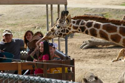Wild Animal Park 3.17.07