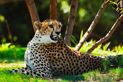 Wild Animal Park-8