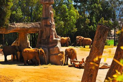 Wild Animal Park-20