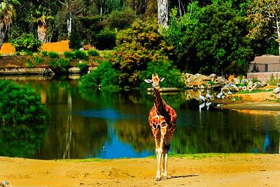 Wild Animal Park-5