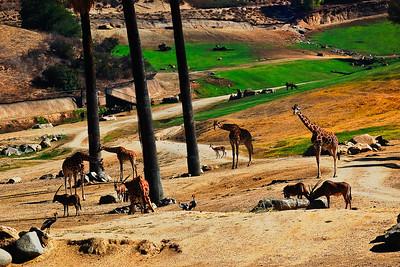 Wild Animal Park-4