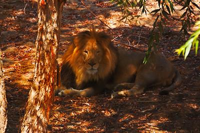 Wild Animal Park-22