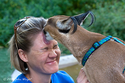 Trainer Annette and Castin (African Caracal)