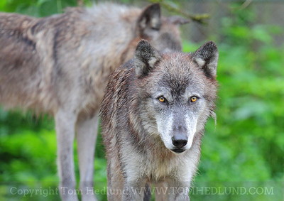 Wolf Creek Habitat & Rescue