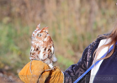 Woo Haven Wildlife Rescue