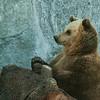 Brown Bear - Ruskeakarhu - Ursus arctos<br /> <br /> I'm waiting... - Odottelen...