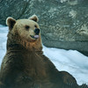 Brown Bear - Ruskeakarhu - Ursus arctos<br /> <br /> This is for you! - Tässä sulle!
