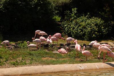 Zoo - June 2009