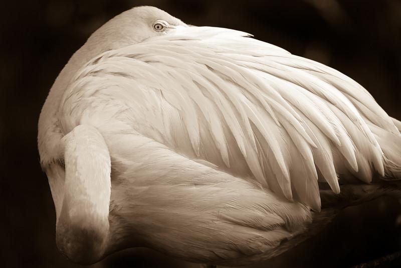 Monochrome Artistic Flamingo Tulsa Zoo