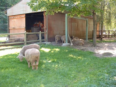 Zoo Sept 10, 2005