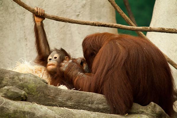 Zoo Trip