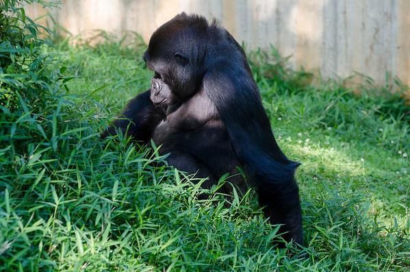 Zoo life June 7 2014