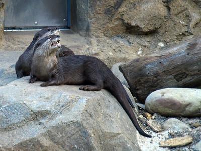 Otter talks back.