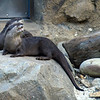 Otter talks back.