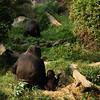 Gorilla family.