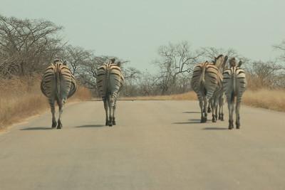 zebra's, de baas op de weg