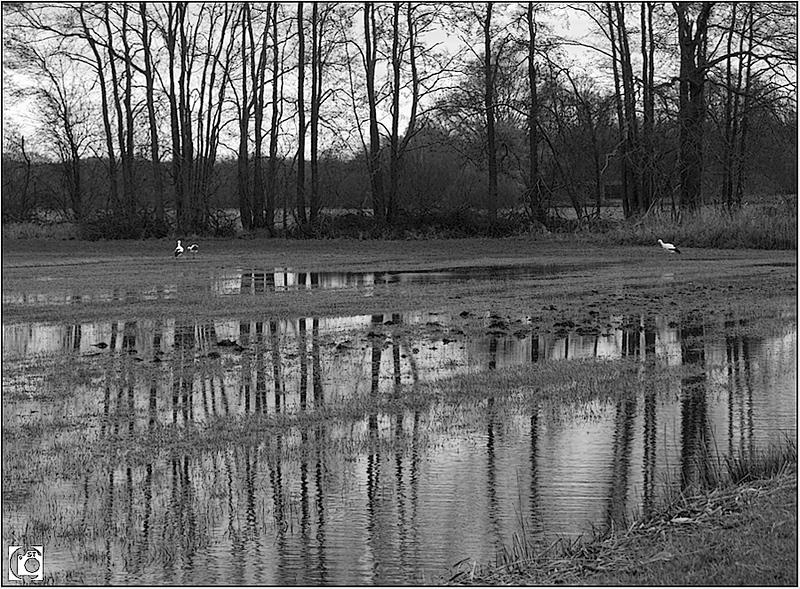 Winter in Drenthe - zwart-wit