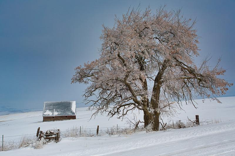 ~ The Farmers Tree ~