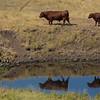 ~ No Bull Ranch ~