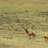 ~ Zumwalt Elk