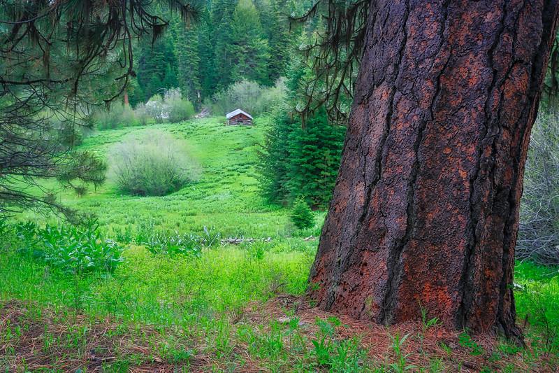~ Johnson Creek  Cabin  ~