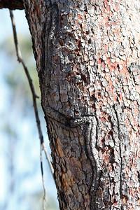 Strange mark on tree