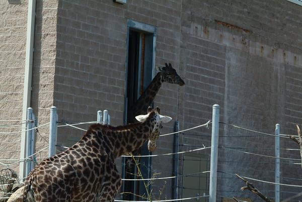 Roger Williams Zoo - RI